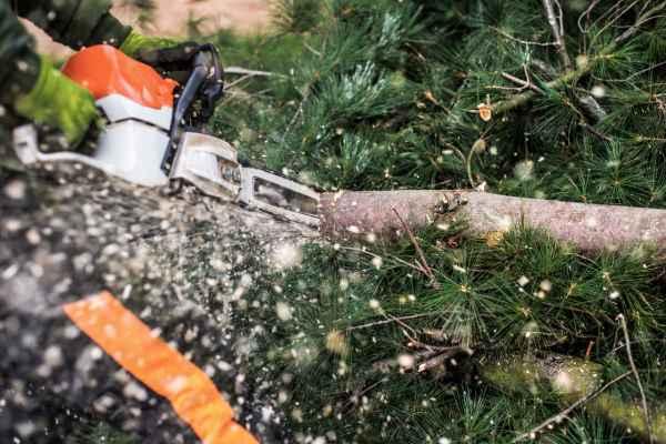 abattage élagage arbre permis