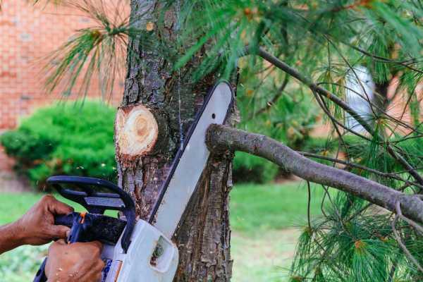 abattage arbre prix belgique