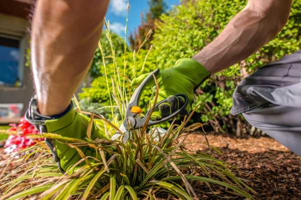 entretien jardin service