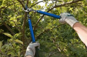 elagage arbres professionnel