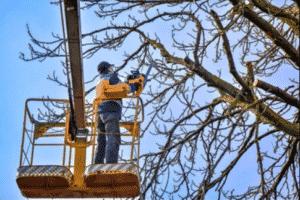 élagueur arbre professionnel