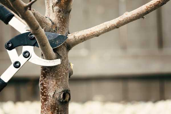 élagage arbre période