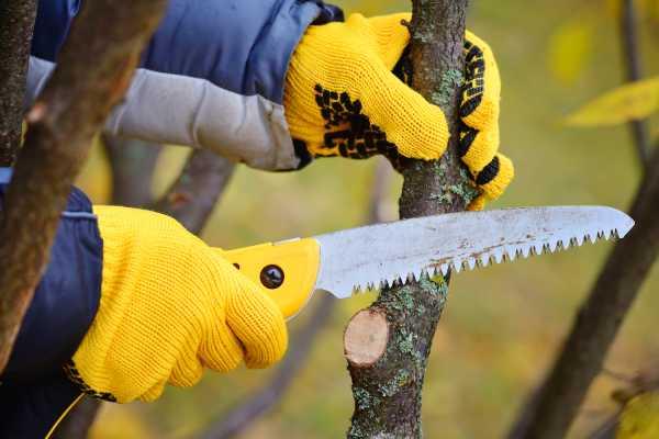 élagage arbre service