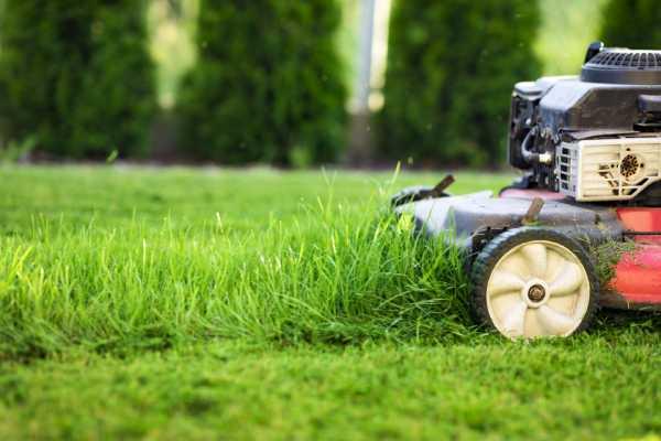 pelouse gazon