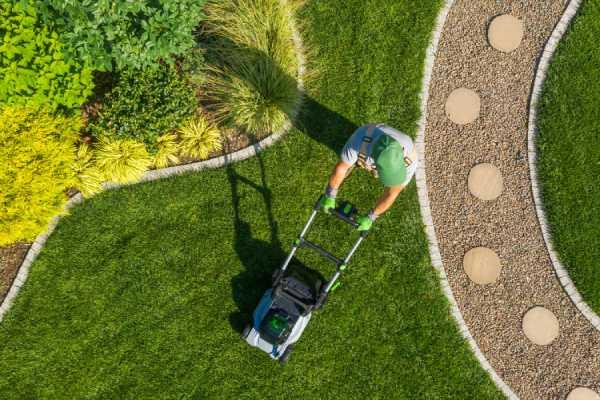 pelouse germination