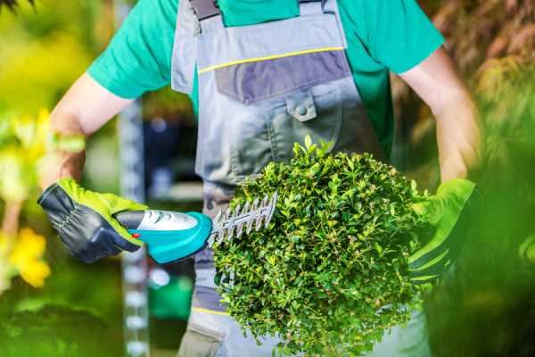 service aménagement jardin